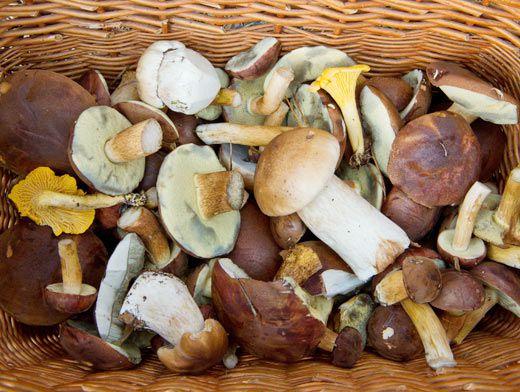 можно ли заморозить грибы