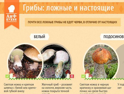 съедобные и ложные грибы фото и описание