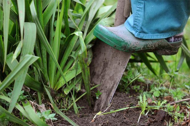Как менять почву в теплице