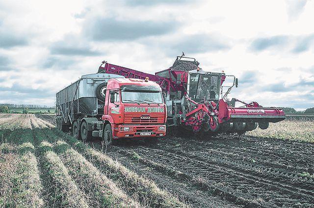 Комбайны стоят дорого, но с их помощью удалось убрать весь урожай даже с мокрой земли.