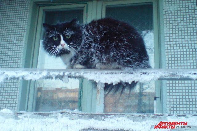 Новогодняя ночь будет не холодной, но до утра оставаться на улице не стоит.