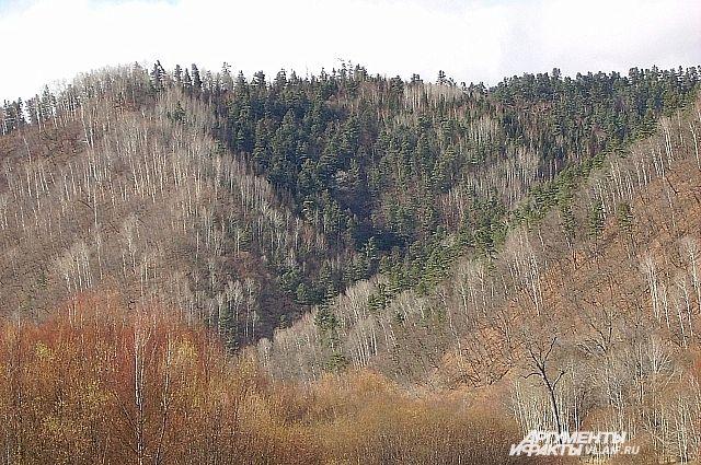 Красивых мест в Приморье становится всё меньше из-за вырубок леса.