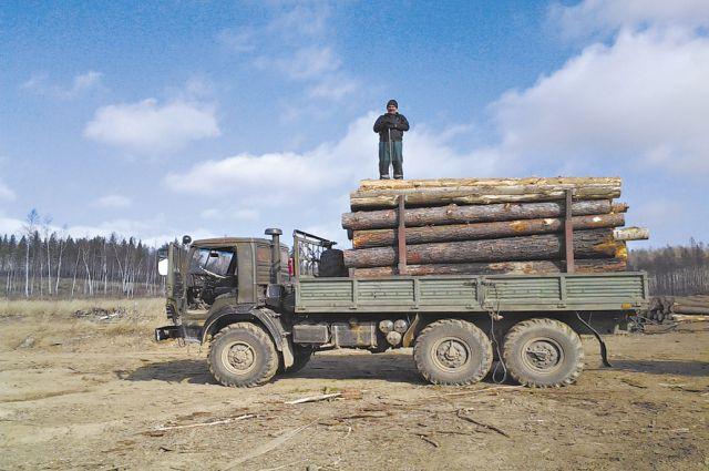 Лес-кругляк вывозят сотнями кубометров.