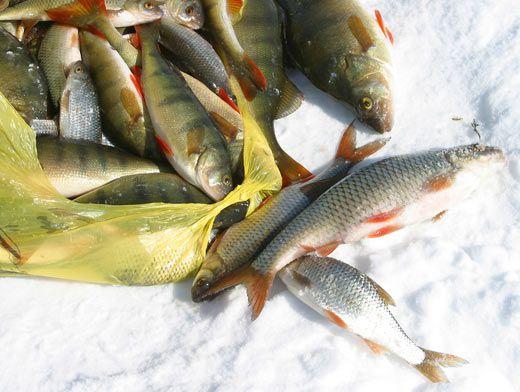 прогноз клева рыбы малин