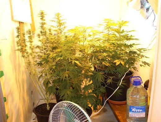 Конопля в квартире выращивание марихуана g