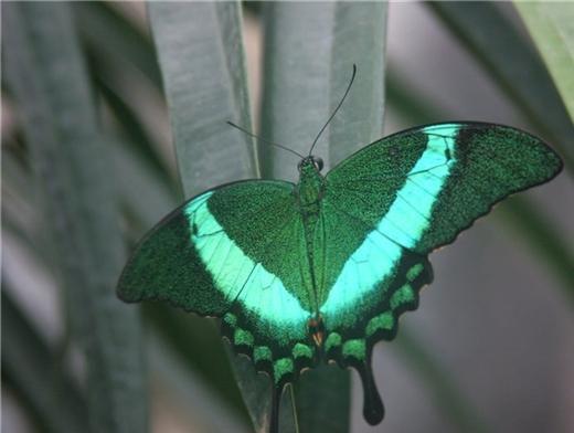 Выставка бабочек в кемерово