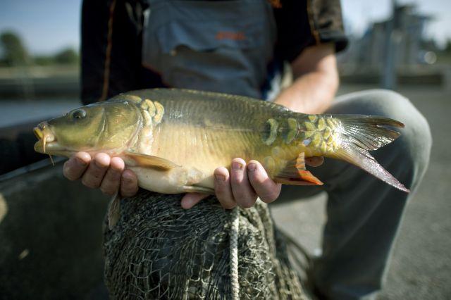 когда можно ловить рыбу весной в краснодарском крае