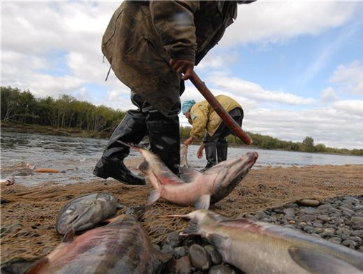 рыбалка на нельму в омске