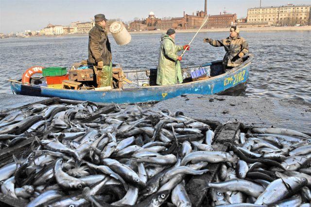 где ловить рыбу в санкт петербурге