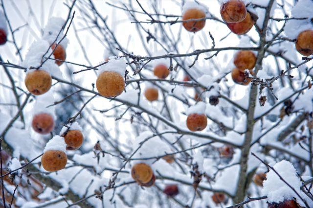 Зима будет стабильной в Омске.