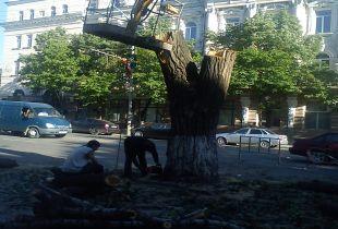 Центральную улицу города  засадят новыми деревьями.