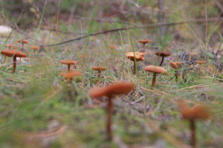 В Ростовской области с начала осени зарегистрирован 31 случай пищевых отравлений от употребления дикорастущих грибов.