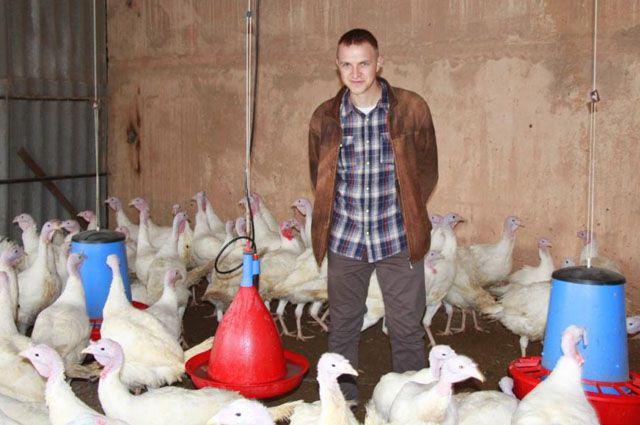 Молодой фермер из Сенгилеевского района Михаил Жуков в царстве индеек.