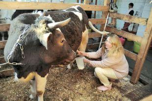 Свердловская область остаётся одним из лидеров в стране по производству молока.