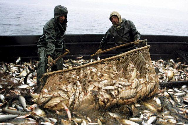 запрет на рыбную ловлю в азовском море