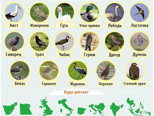 стихи про птиц на украинском языке для детей
