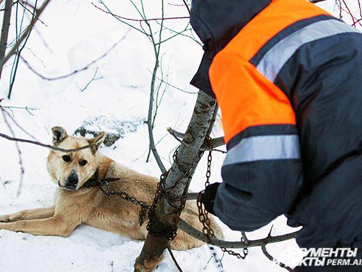 Отлов собак заказать службу