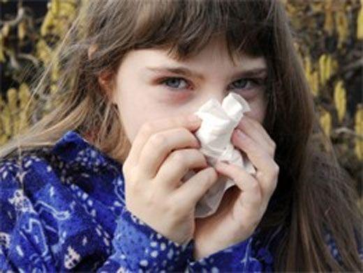 чем вылечить аллергию у собаки