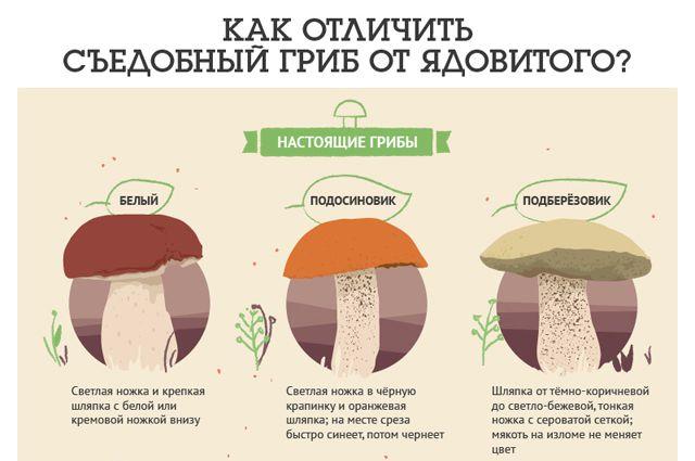 грибы которые можно есть фото