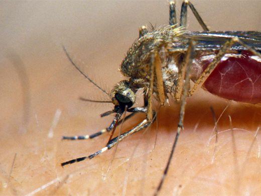 Как лечить укусы насекомых в домашних условиях видео