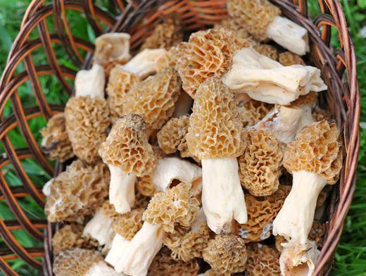 Шампиньоны, сморчки и строчки – первые весенние грибы | Продукты и ...