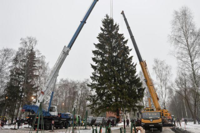 Погрузка главной ели России в подмосковном лесничестве.