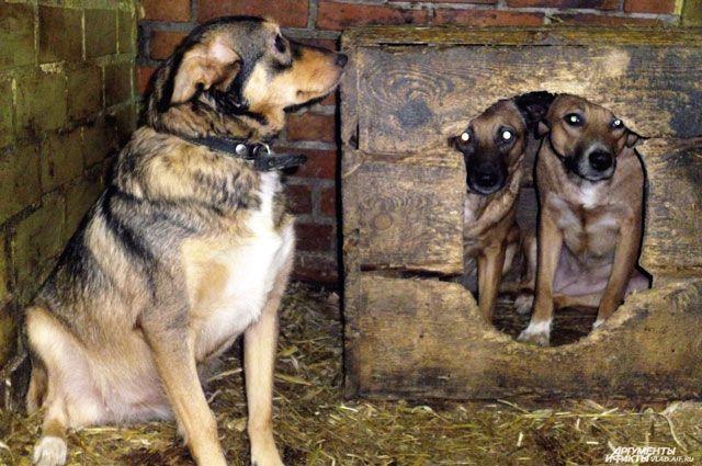 Пристроить в семьи удаётся около 70% от общего количества поступивших в приют животных.
