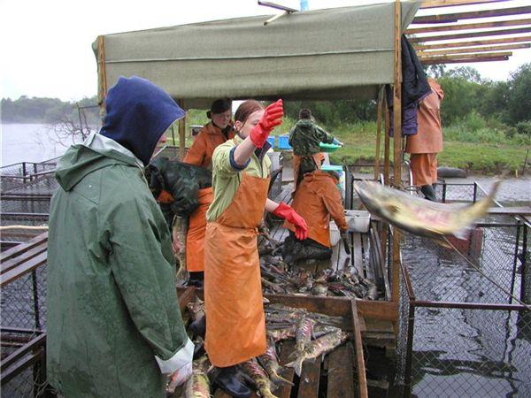 камчатка домик для рыбака