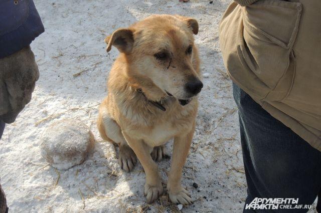 Уличные собаки редко нападают на людей. уверяют зоозащитники.