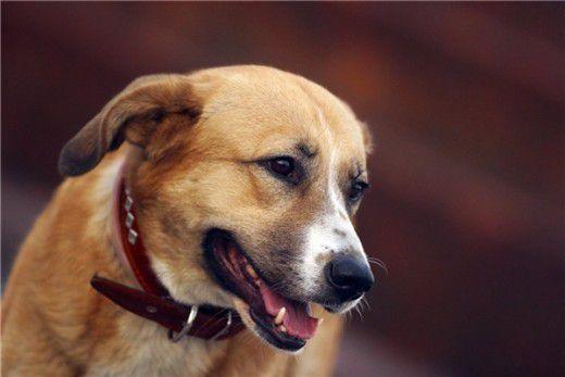 Собак могут заставить выгуливать в строго отведенных местах