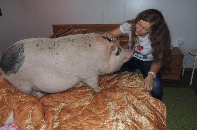 Сколько живут свинки в домашних условиях 506