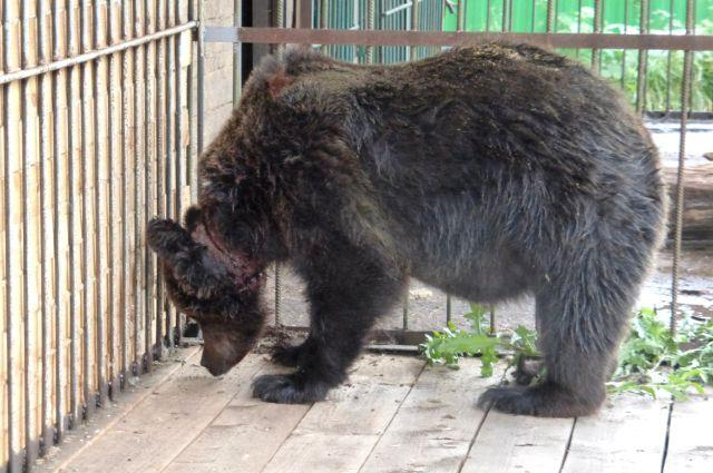Жильё животным установили в городском парке Уссурийска.