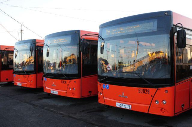 Новые калининградские автобусы.