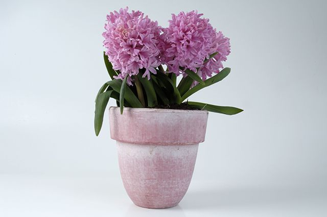 Как сохранить живые цветы на зиму купить искусственные цветы мелкие