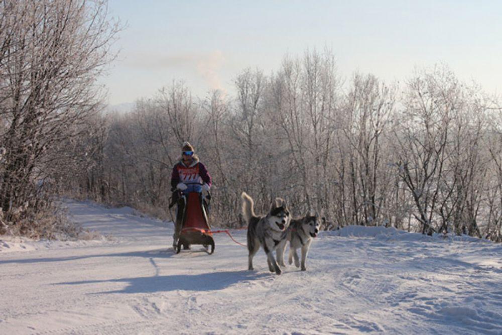 В дисциплине упряжки в классе 4 собаки приняли участие как юниоры, так и опытные спортсмены. Все они преодолели 2 этапа по 5 километров.