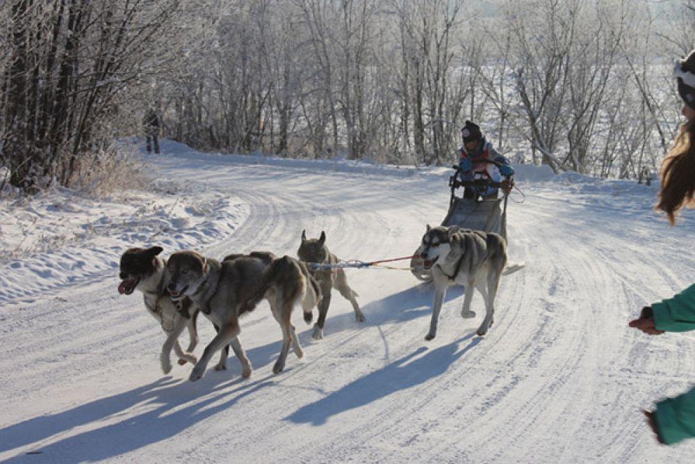 В дисциплине упряжки в классе 6 собак взрослые спортсмены преодолели 16 километров.
