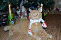 У семейного любимца Рыжуни есть свои новогодние традиции.