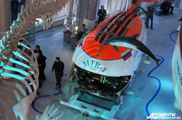 Но главными объектами экспозиции являются глубоководный обитаемый аппарат (ГОА) «Мир-1», а также один из самых больших в мире скелетов кашалота.