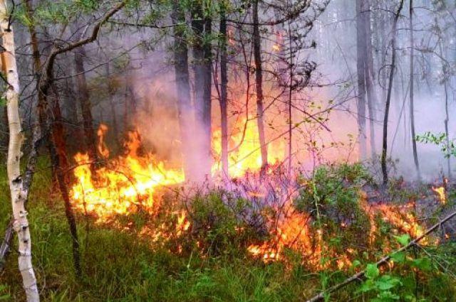 Пожар в тайге - большая беда для всего живого.