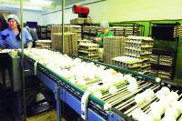 Предприятие увеличило производство яиц с 12 млн до 95 млн.