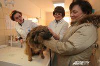 Все плотоядные животные подлежат обязательной ежегодной иммунизации против бешенства.