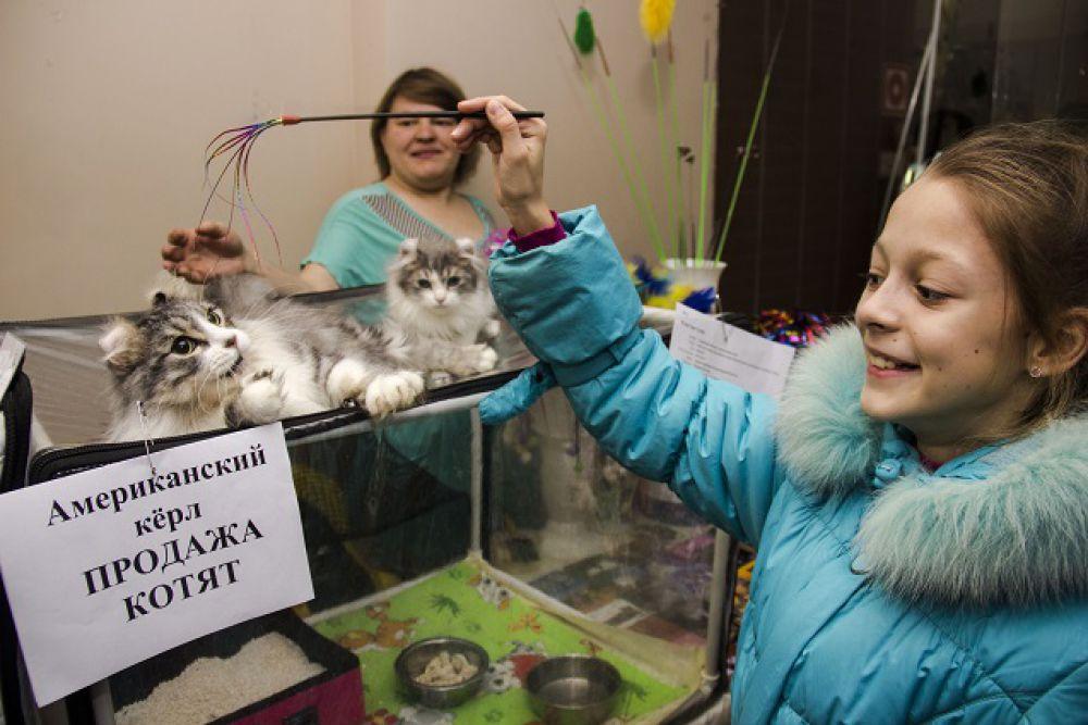 Американские керлы приехали на выставку в Пензу из Челябинска.