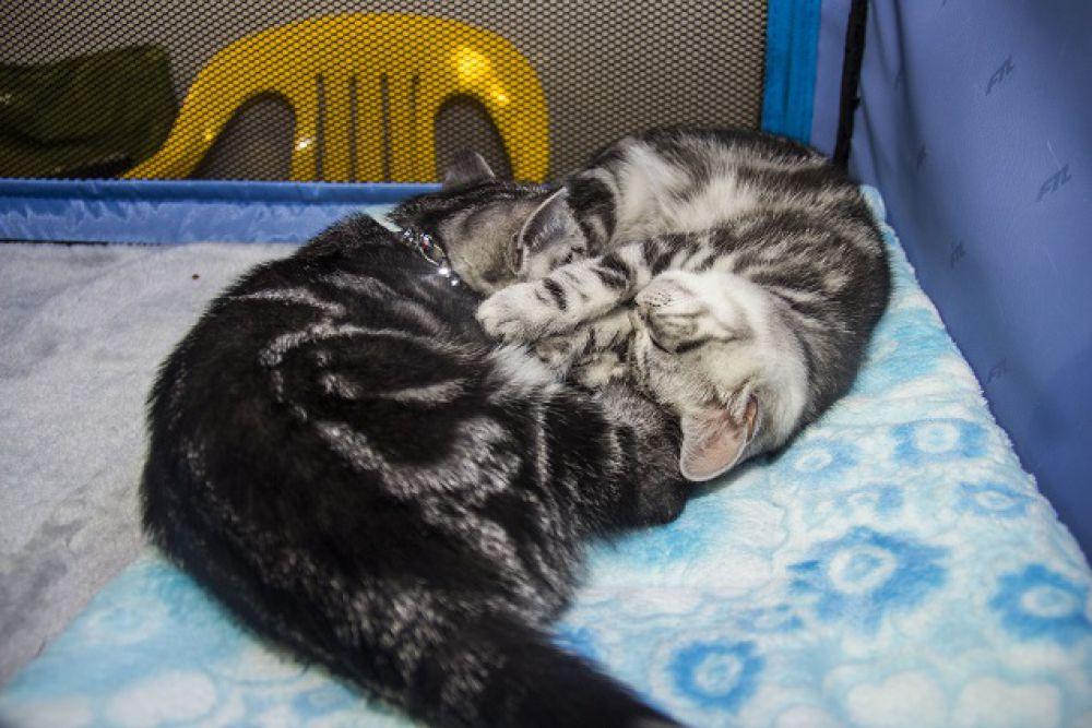 Конкурсанты устали и легли отдохнуть.