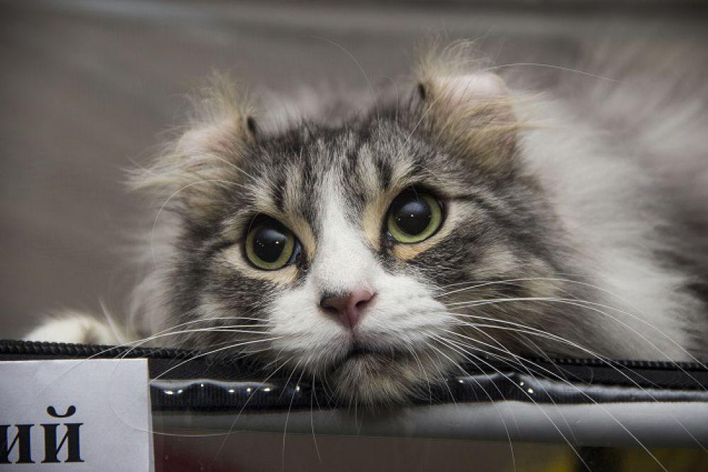 Кот по имени Листик.