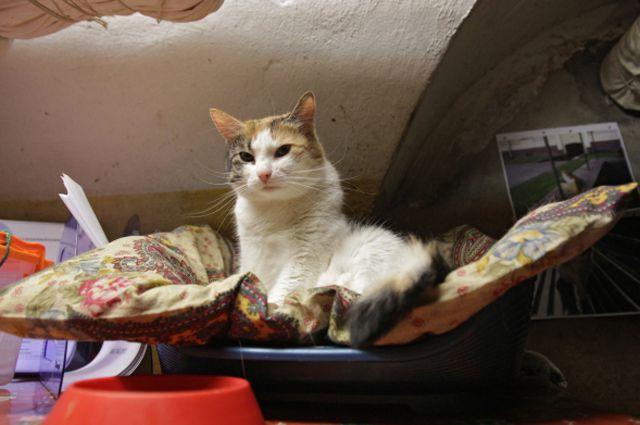 Кот в подвале Эрмитажа во время ежегодной акции «День эрмитажного кота».