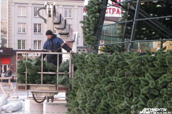 Главную елку Калининграда монтировали почти неделю.