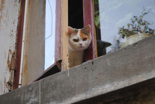 Многим смолянам приходится открывать окна из-за духоты в квартирах.