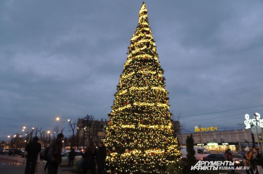 Главная зеленая красавица Краснодара.
