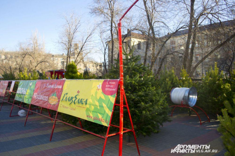 Елочные базары открылись в Волгограде во всех оживленных местах.