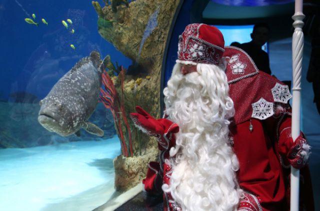 дед мороз назвал самый новогодний вид рыбы
